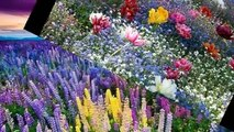JARDINS FLORIDOS / FLOWERY GARDENS