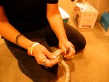 Assist feeding of Ball Python- Done by Deb's Exotics