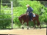 Reining Quarter horses for sale