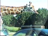 Stacey & Michael @ the Great Adventure Safari 1999