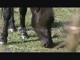 "Tribute to...""Wild Horses"" (Wild Horse music video)"