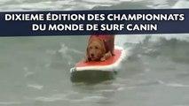 Cinquante chiens réunis aux championnats du monde de surf canin