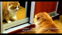 BEST ANGRY CATS COMPILATION - Best Funny Animals Videos Compilation November 2014