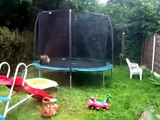 funny baby fox cubs playing on trampoline (muted)