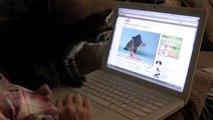 Kitten Wearing a Tiny Hat - Ice Cream Reaction