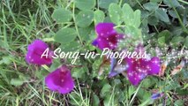 The Flowers have Gone Wild- Chorus- by Birdsong and the Eco-Wonders