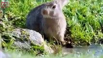 Animal Documentary Full Length || Iberian Lynx Cat Hunting Attacks Full Nature Wildlife Documentary