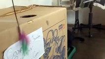 Gato Miguel brincando com caixa