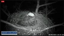 2015 03 05 Berry College Eagles:  Brief Sleep Interruption