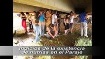 Voluntariado Ambiental Huelva 2010 Mundo Solidario