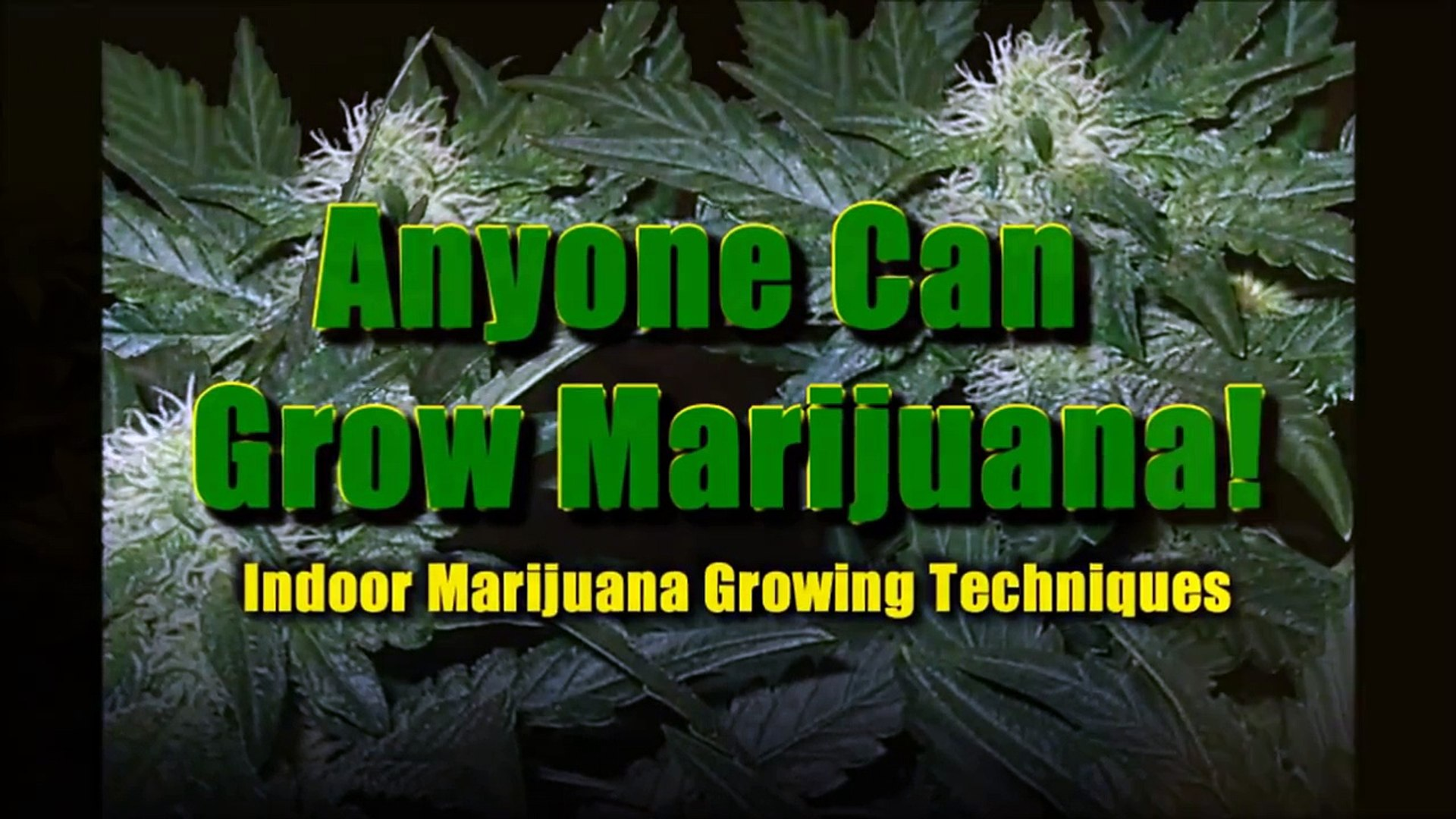 Sexing Marijuana Plants - Male/Female - Sexing Marijuana Plants 101