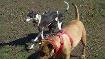 Fun at the Dog Park - Happy Hump Day