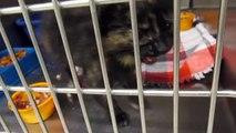 *URGENT!* CATS/KITTENS for ADOPTION @ North Platte Animal Shelter ~ 6-12-2013