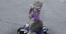 Un chat frimeur en voiture veut être le premier à démarrer au feu rouge