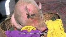 Stiftung für Tierschutz Hof Butenland - Schweine
