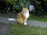 Our beautiful Oscar cat has died