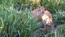 Animais fauna brasileira, Mato Grosso do Sul, Fauna pantaneira,