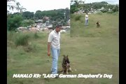 """German Shepherd MANALO K9's """"LARS"""" Patrol K9 (VINTAGE VIDEO)"""