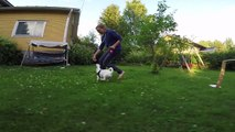 Summer action - Dog agility, jumping horses, running children and more
