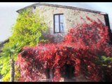 Agriturismo Property for Sale in Italy: Well established bed & breakfast in Siena Tuscany