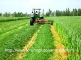 Mera tohumu,mera karışımları,mera bitkileri,yapay çayır mera tohumları