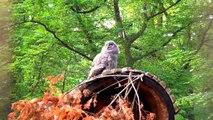 Owls in Opole Zoo Sowy w Zoo Opole