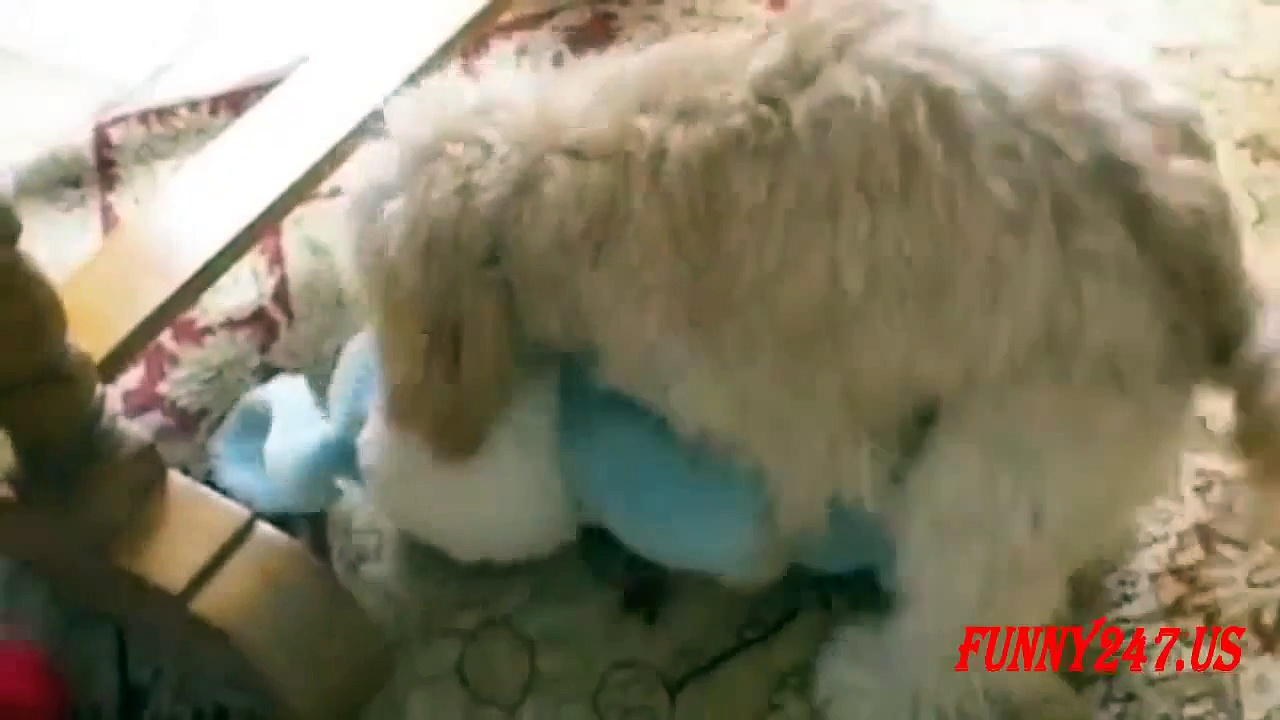 Funny Dog Humping Toy- The Poor Dog
