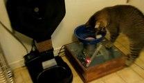 Un distributeur de croquettes pour obliger son chat à chasser