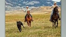 Ranch Branding W D Ranch Montana