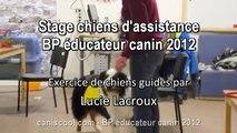 Brevet Professionnel Educateur Canin 2012 Chiens Guides