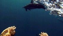 Wild dolphin swim in Mauritius - Nage avec des dauphins en liberté à l'Ile Maurice