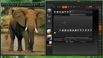 Elephant Zbrush/Blender Sculpt (Ebony and Ivory)
