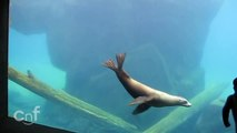Little Boy Finds New Sea Lion Playmate | Under Water Shadow