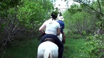 Amazing Horse back riding with Paso Fino on Curacao