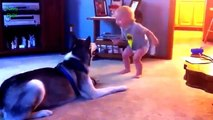Funny cats Dogs and babies playing together Cute Dog cat baby compilation Dogs life