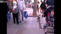 Liveleak - Man walks his duck along street-copypasteads.com