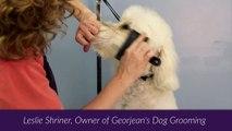 Dog Grooming Warrenton VA - Dog Grooming Tutorial