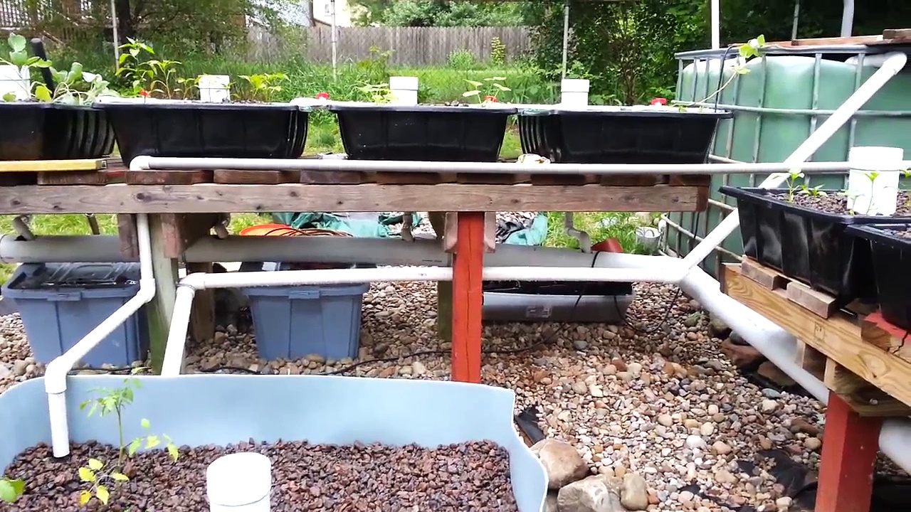 Backyard Aquaponic system with towers