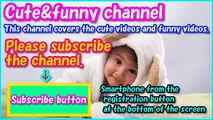 Funny baby - Funny animals - Funny dogs - compilation of funny videos of babies and animal