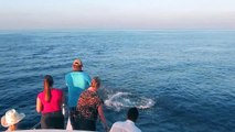 Visit Dolphin Sunset Cruise in The Maldives | Travel Maldives Beach Resort holidays