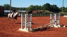 Quarter Horse Paint Mare for Sale