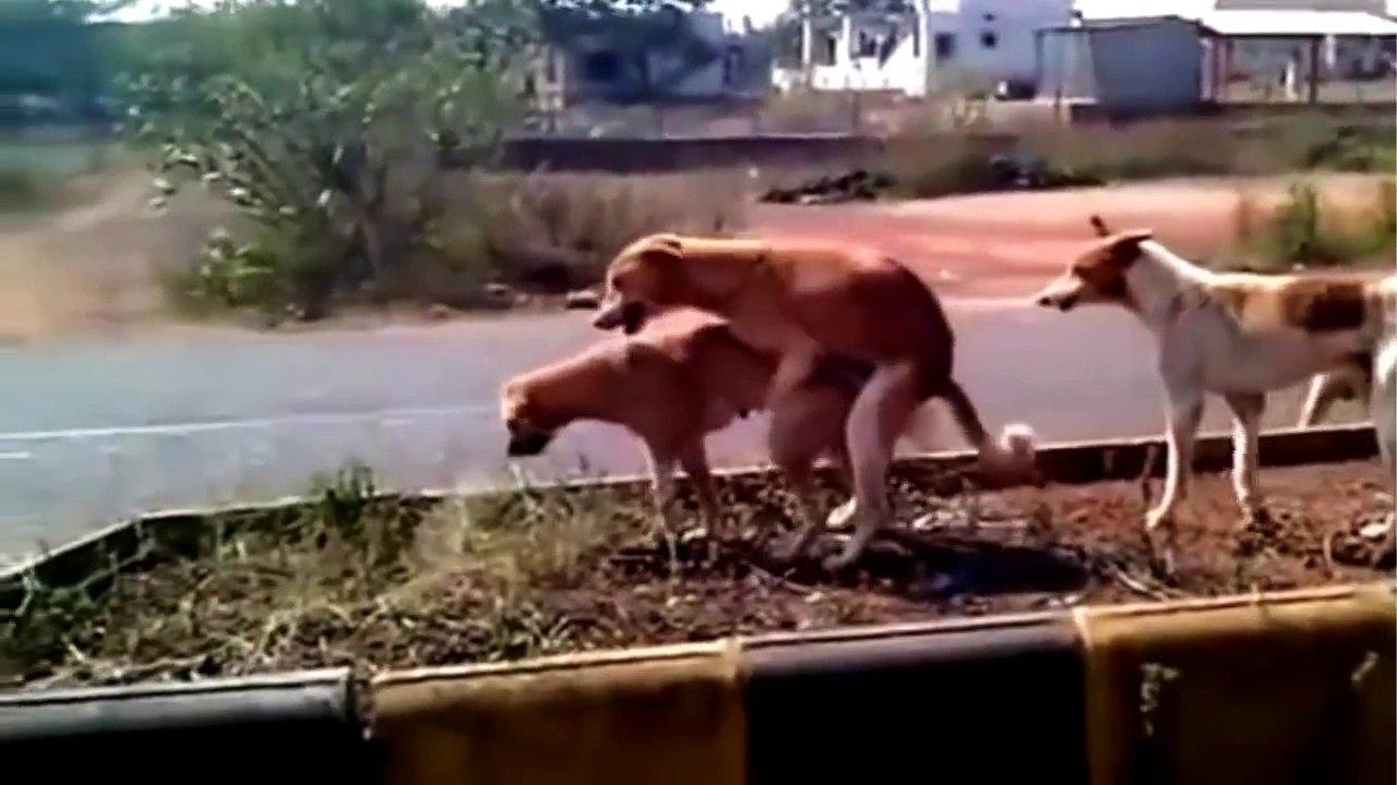 Frau mit hund sucht mann mit herz youtube