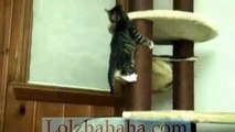 Cute kitten falling off cat tree