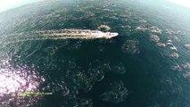 Des baleines et des dauphins filmés avec un drone au large de la Californie