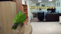 Kili Senegal Parrot - Flighted Parrot Tricks Medley (Flying Senegal Parrot Tricks)