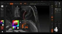 Sculpting Human Anatomy in ZBrush® - The Orbit 20