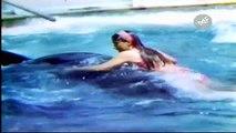 #1 Mujer Atacada por Orca de 5000 Kg - Los Temerarios Más Tontos del Mundo