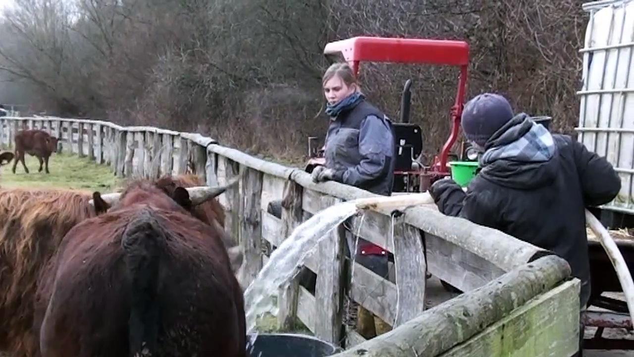 Animal Farm Arche Warder – Ark for rare livestock breeds – Funny