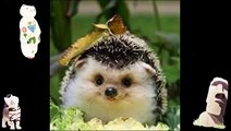 Funny Animals Jokes Animal Compilation Crazy Videos Picture Jokes Of The Day