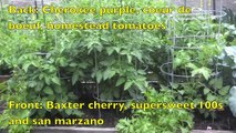 Growing vegetable in raised beds: walking through the community garden bed